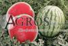 Семена бессемянного  арбуза Бостон F1 1000 шт - фото 8820