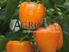 Семена перца Магно F1 500 шт - фото 8910