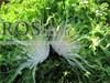 Семена эндивия Бекеле 5000 шт - фото 8953