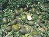 Семена дыни Сисапо F1 (Пиел де Сапо) 500 шт - фото 8989