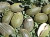 Семена дыни Хабалон F1 (Пиел де Сапо) 500 шт - фото 8990