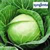Купить семена капусты Пруктор F1 2500шт - фото 9266