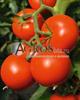 Семена томата Тойво F1 1000шт - фото 9306