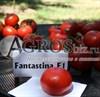 Семена томата Фантастина F1 500 шт - фото 9332