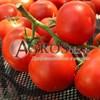 Семена томата Фантастина F1 500 шт - фото 9333