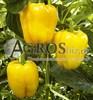 Семена перца Кадия F1 500 шт - фото 9421