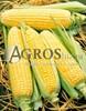 Семена кукурузы Спирит F1 1 кг - фото 9467