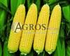 Семена кукурузы Свитстар F1 1 кг - фото 9475