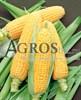 Семена кукурузы Леженд F1 1 кг - фото 9522