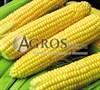 Семена кукурузы Супер Санданс F1 1 кг - фото 9540