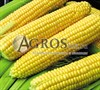 Семена кукурузы Супер Санданс F1 5000 шт - фото 9543