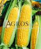 Семена кукурузы Свитстар F1 100 000 шт - фото 9551