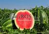 Семена арбуза Соренто F1 1000 шт - фото 9584