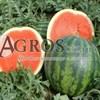 Семена арбуза Соренто F1 1000 шт - фото 9585