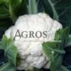 Семена цветной капусты Телерджи F1 2500 шт - фото 9607
