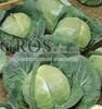 Семена капусты Адаптор  F1 2500шт - фото 9611