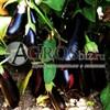 Семена баклажана Дестан F1 5 г - фото 9798