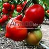 Семена томата Вегго F1 500 шт - фото 9963
