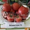 Семена томата Мамстон F1 500шт - фото 9989
