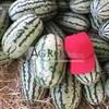 Семена арбуза Тамтам F1 1000 шт - фото 9998